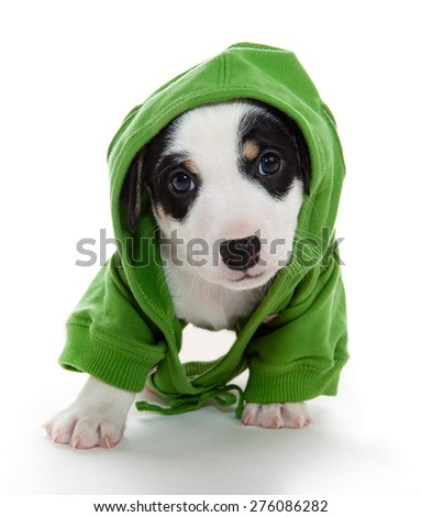 Cute puppy in t-shirt with hood - stock photo