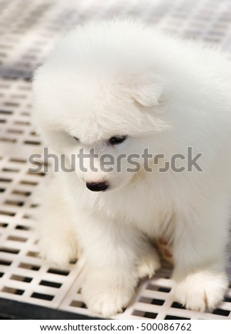 Cute puppy inside a cage on display for sale