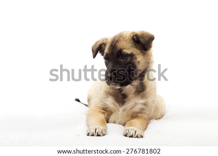 cute puppy looking - stock photo