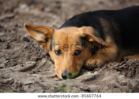 Cute puppy lying on the ground