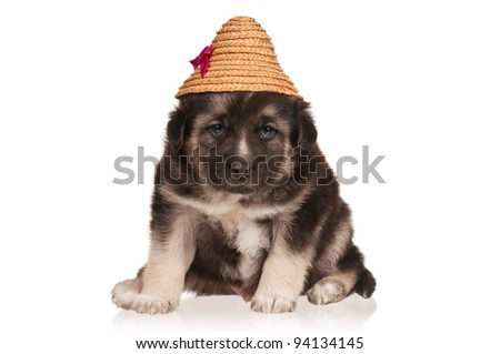 Cute puppy of 3 weeks old in straw hat on a white background