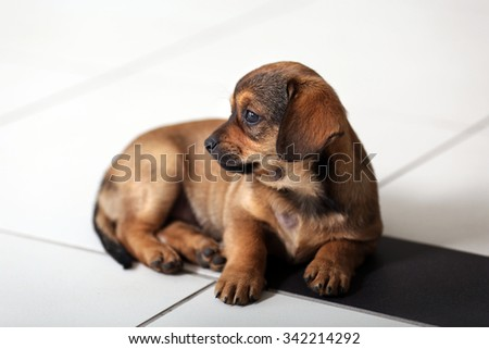 Cute puppy on floor at home