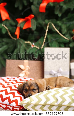 Cute puppy on pillow on Christmas background - stock photo