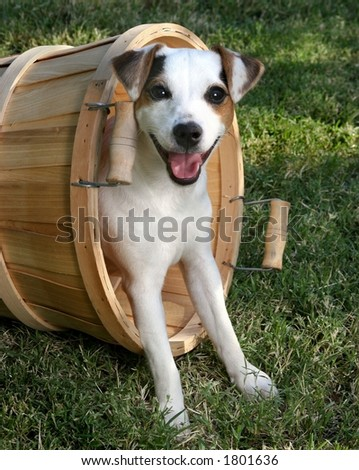 cute puppy playing in basket on grass - stock photo