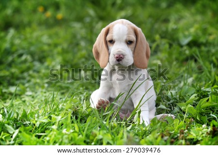 Cute puppy sitting in the grass - stock photo