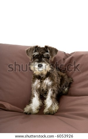Cute puppy sitting on a giant beanbag - stock photo