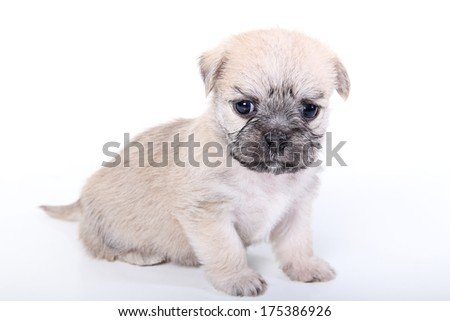 cute puppy sitting on white background - stock photo