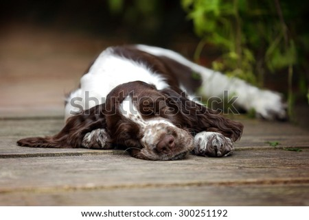 Cute puppy sleep - stock photo