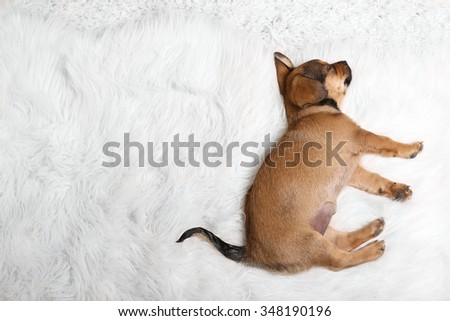 Cute puppy sleeping on carpet at home - stock photo
