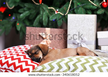 Cute puppy sleeping on pillow on Christmas background - stock photo