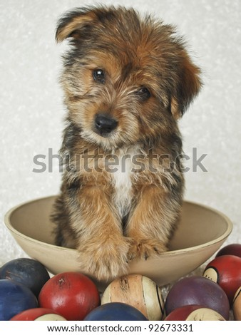 Cute puppy tilting his head sitting in a bowl with pool balls around him.