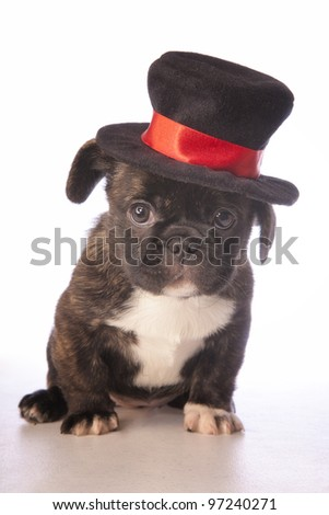 Cute puppy wearing a top hat isolated on white - stock photo