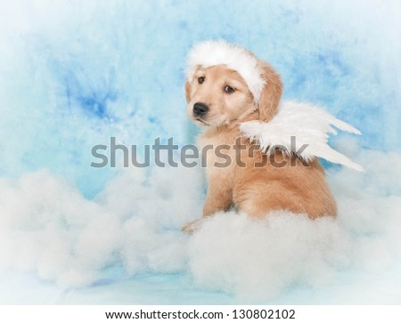 Cute puppy wearing Angel wings and a halo sitting in the clouds, with a blue background.