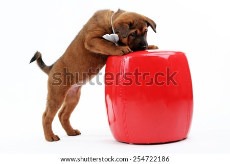 Cute puppy with bow-tie and leather pouf isolated on white - stock photo