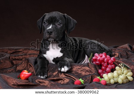 Cute puppy with fruit on a brown background - stock photo