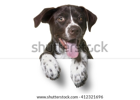 Cute Puppy with paws over white sign.  Catahoula Lab Mix Dog - stock photo