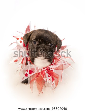 Cute puppy with red isolated on white background