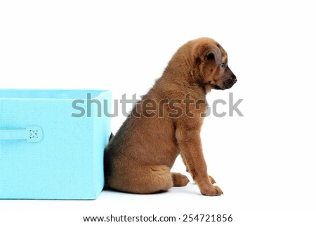 Cute puppy with textile box isolated on white - stock photo
