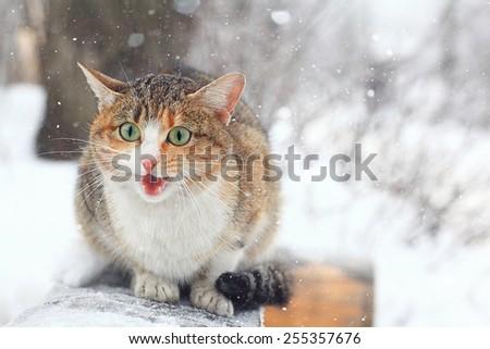 cute purebred cat - stock photo