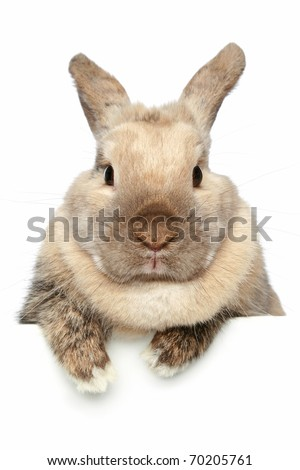 Cute Rabbit. Close-up portrait on a white background - stock photo