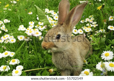 Cute Rabbit in Grass - stock photo