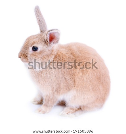 Cute rabbit, isolated on white