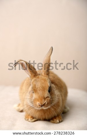 Cute rabbit on sofa, close up - stock photo