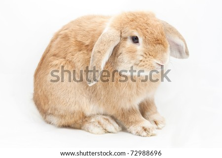 Cute rabbit on white background - stock photo