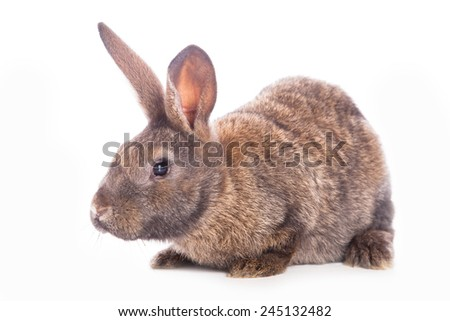 Cute rabbit sitting against the white background