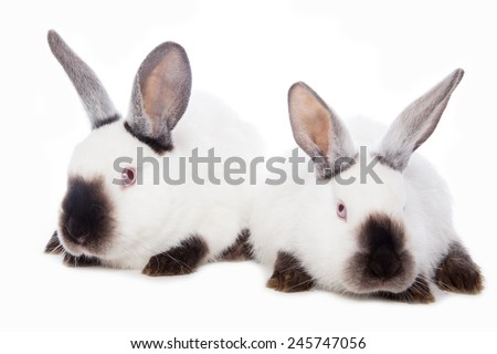 Cute rabbits sitting against the white background - stock photo