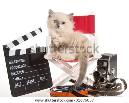 Cute Ragdoll kitten on director chair with movie props, on white background - stock photo