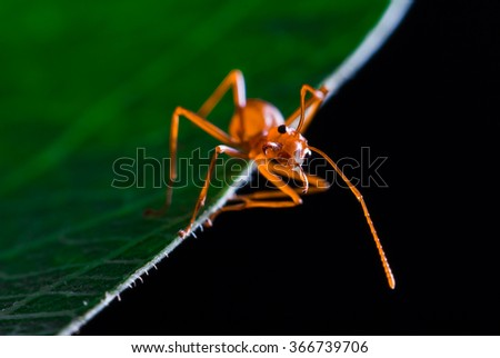 cute red ant on green leaf - stock photo