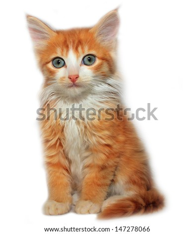 Cute red cat - stock photo