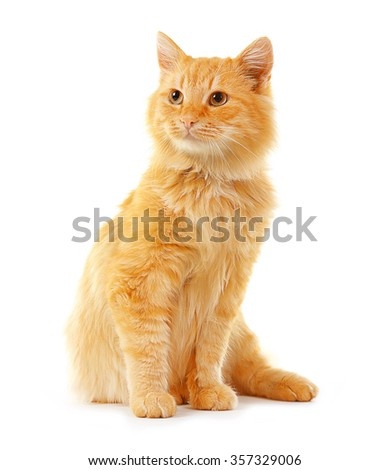 Cute red cat isolated on white background - stock photo