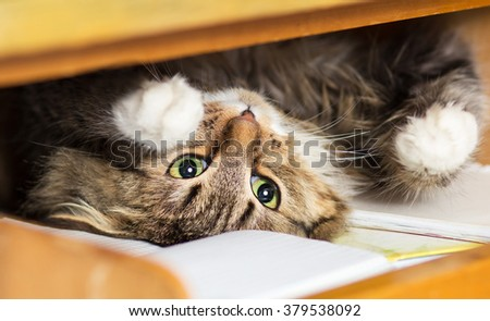 cute red cat lying in the closet on the shelf with things