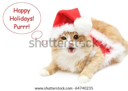 "cute red cat wearing christmas clothing saying ""Happy holidays!"""
