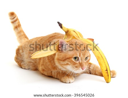 Cute red cat with banana skin, isolated on white - stock photo