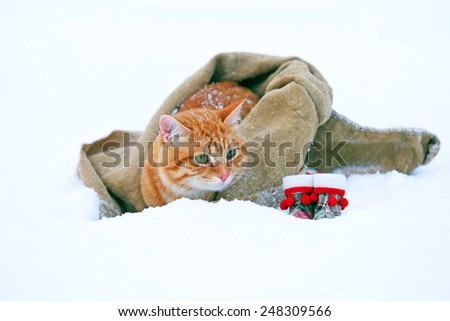 Cute red cat with Santa hat wrapped in blanket on snow background - stock photo