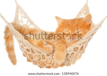 Cute red haired kitten sleeping in hammock on a white background. - stock photo