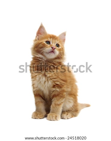 cute red kitten against white background - stock photo