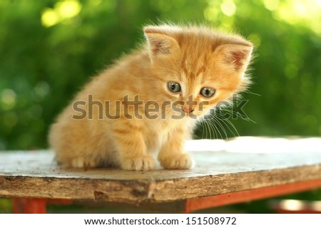 cute red kitten with blue eyes sitting on wooden table against green summer bokeh - stock photo