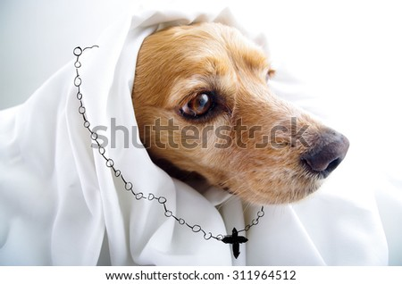 Cute religious thoughtful English Cocker Spaniel puppy in front of a white background with cape and rosary sketch looking like nun. - stock photo