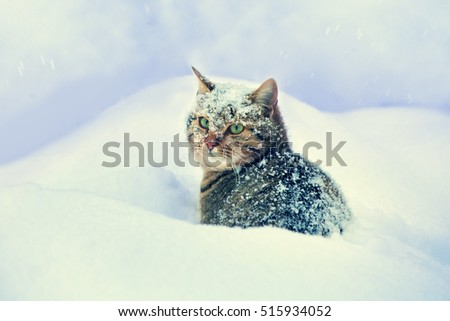 Cute sad cat sitting in the deep snow in blizzard
