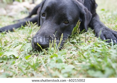 Cute sad or dreaming dog, with focus on the nose (e.g. can be used for Missing You or Please, Forgive Me postcards) - stock photo