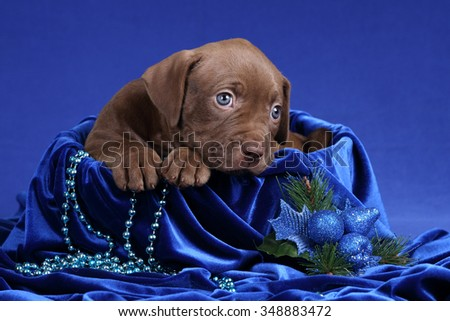 Cute sad puppy in a basket on a blue background - stock photo