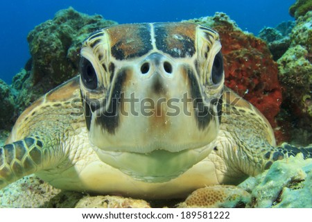 Cute Sea Turtle face - stock photo