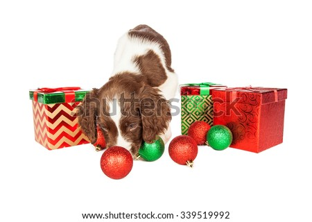 Cute seven week old puppy playing with Christmas ornaments next to presents - stock photo