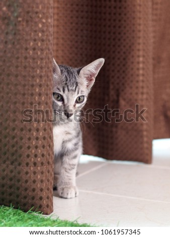 Asian cat young