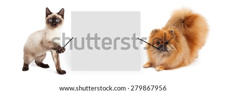 Cute siamese kitten and Pomeranian dog holding up a blank sign to enter your marketing message onto - stock photo