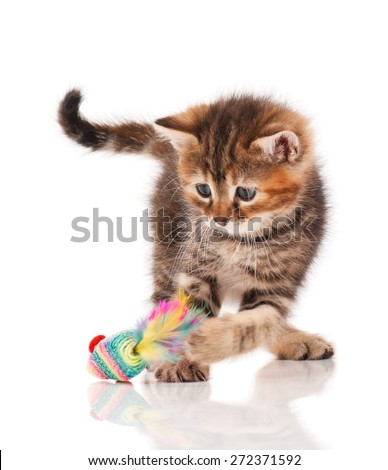 Cute siberian kitten with  toy mouse isolated on white background - stock photo